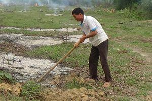 Nghệ An: Bất cập từ việc giao đất rừng cho lâm trường quản lý