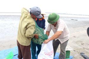 Nghệ An: Nuôi ngao biển xuất khẩu thu lãi 300 - 500 triệu đồng/hộ/năm
