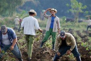 Cuba và Mỹ đối thoại về hợp tác song phương về nông nghiệp