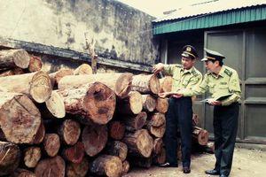 Bắc Giang bắt vụ vận chuyển 4,3m3 gỗ và 6.300kg củi trái pháp luật