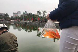 Ngày ông Công, ông Táo: Thả cá chép ra ao hồ có thể phá hoại hệ sinh thái
