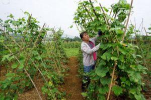 Hòa Bình chú trọng phát triển nông nghiệp hữu cơ