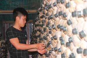 Hành trình khởi nghiệp từ 'cây nấm bình dân' của 9X Quảng Trị