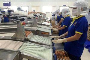Nâng cao hiệu quả sản xuất và tiêu thụ nông sản