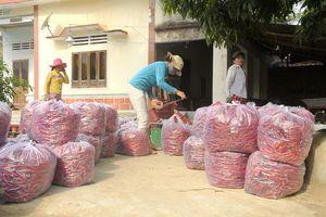 Giá tạm ổn, niềm vui trải khắp vùng ớt xuất khẩu Bình Định