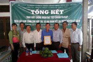 Sản xuất cam sành được chứng nhận VietGAP