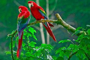 Độc lạ trang trại chim quý tộc tiền tỷ giữa Hà Nội