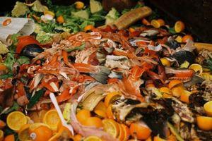 Mỗi ngày, người Mỹ vứt đi khoảng 150.000 tấn lương thực