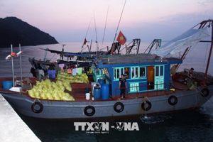Tám tàu cá khai thác trái phép 5 tấn ốc điếu tại Quảng Ninh