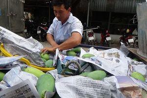 Thủ phủ xoài Đồng Tháp đã sẵn sàng cho trái đặc sản 'bay' sang Mỹ