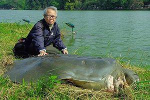 Tiêu bản cụ Rùa Hồ Gươm trưng bày tại đền Ngọc Sơn?