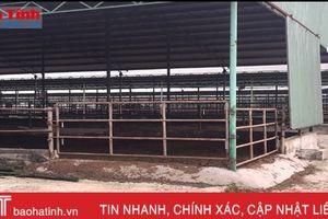 Dự án chăn nuôi bò Bình Hà: 'Vắng như chùa bà Đanh'!