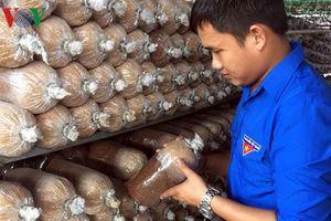 9x thu lời 150 triệu đồng mỗi tháng từ trồng nấm