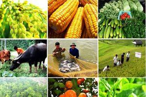 Hỗ trợ đến 15 tỷ đồng/dự án đầu tư vào nông thôn, giảm thiểu ô nhiễm môi trường