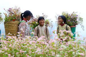 Đến Hà Giang, đừng quên 5 địa điểm ngắm hoa tam giác mạch tuyệt đẹp