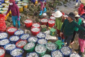 Đầu năm, ngư dân Quảng Ngãi vui như hội vì trúng đậm 'lộc biển'