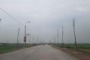 Quảng Ninh: Xôn xao chuyện hàng sấu trồng có giá 'chát' ở Đông Triều