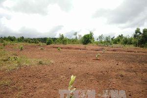 Kiến nghị xử lý sai phạm trong quản lý đất đai tại huyện Trần Văn Thời, Cà Mau