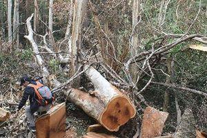Bộ Công an bắt vụ phá rừng lớn tại Vườn quốc gia Yok Đôn