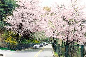 Những điểm đến hấp dẫn tại Hàn Quốc mùa này