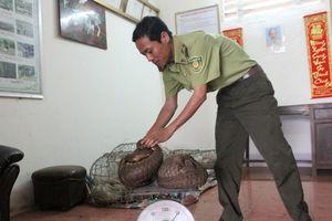 Quảng Trị: Phát hiện 15 cá thể tê tê quý hiếm được vận chuyển lén lút qua biên giới