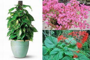 6 loại cây 'cực độc', tuyệt đối không được trồng trong nhà