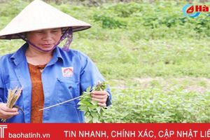 Ngạc nhiên với làng rau tỏa hương ở Hà Tĩnh