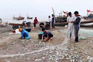 Ngư dân Nghệ An trúng đậm mùa cá trích đầu năm
