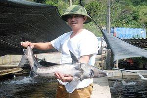 Kinh ngạc những hồ cá bạc tỷ trên núi của nông dân Việt