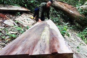 Gia Lai: 5 cán bộ bị kỷ luật vì để mất rừng tại Kbang