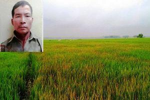 Nghi người tình lấy ví, người đàn ông dùng thuốc diệt cỏ phá lúa