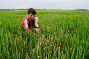 Tình cũ phá ruộng lúa: Đền đầy đủ thì tha thứ