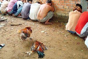 Huế: Bắt quả tang 13 đối tượng đá gà, thu giữ hàng chục triệu đồng