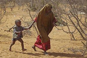 Liên Hợp Quốc kêu gọi hỗ trợ khẩn cấp cho nạn đói tại Tây Phi