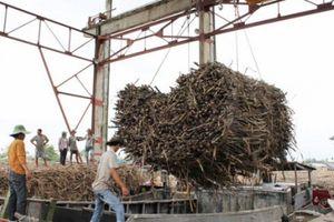 Hơn 680.000 tấn đường tồn kho, ngành mía đường chưa thoát lao đao