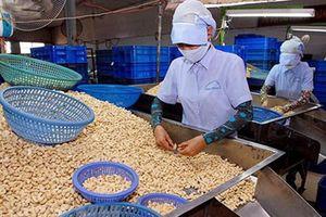 Hơn 74.000 tấn hạt điều được xuất khẩu trong quý I/2018