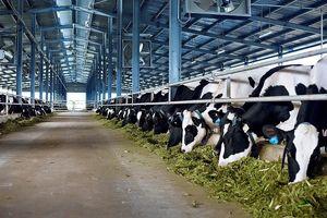 Thông tin mới vụ dân đổ sữa vì cho rằng bị ép giá tại Nghệ An