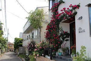 Sững sờ với vẻ đẹp của ngôi nhà hoa hồng tại Nhật Bản