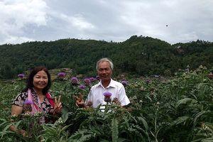 'Sống ảo' và 'sống khỏe' ở vườn dược liệu quý giữa núi rừng Sapa
