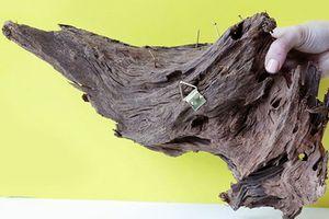 Trang trí nhà sang xịn nhờ chậu cây được làm từ... gốc cây khô