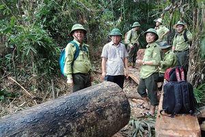 Quảng Nam: Hàng loạt cán bộ kiểm lâm xin nghỉ việc