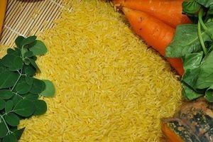Gạo vàng biến đổi gen được Úc và NewZealand phê duyệt làm thực phẩm