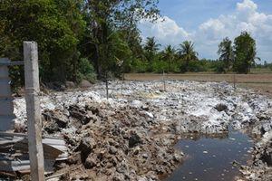 'Hạ huyệt' 377 con heo chết ngộp xuống ruộng