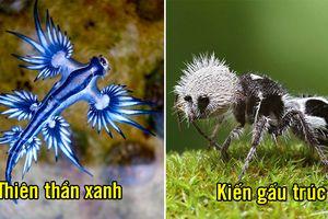 Những loài động vật có ngoại hình kỳ dị mà dễ thương nhất hành tinh
