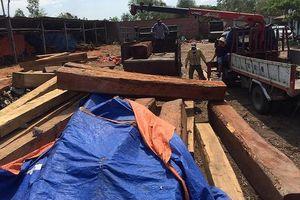 Bắt khẩn cấp một 'trùm'gỗ kiêm giám đốc công ty ở Gia Lai