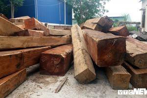 Bắt khẩn cấp trùm buôn lậu gỗ ở Gia Lai