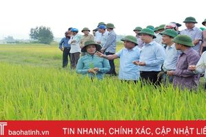 Chủ tịch UBND tỉnh Đặng Quốc Khánh kiểm tra kết quả sản xuất thử giống lúa BQ