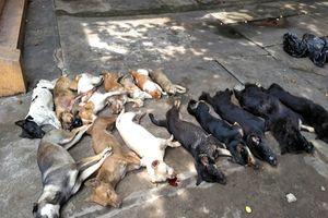 Nam thanh niên chở 15 con chó, mèo chết nghi là ăn trộm