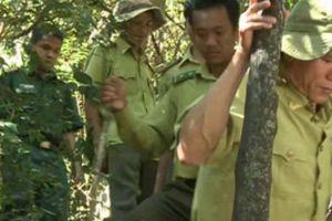 Ngày Kiểm lâm Việt Nam: Những người canh giữ rừng vàng