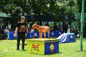Ngắm những chó cưng tranh tài trong Agility Dog Show